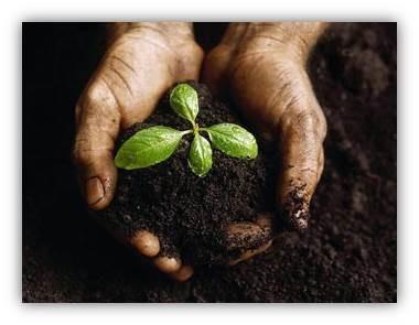plant-indegenious